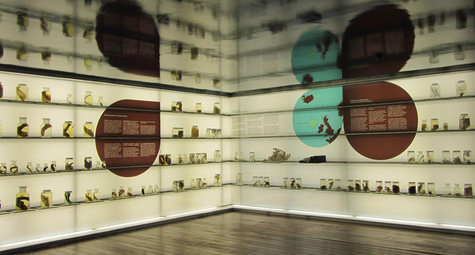 Gabinete de Curiosidades Científicas do Museo de Mar de Galicia
